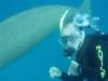 dugong-with-guy-bennett